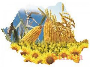 agricultura loterie