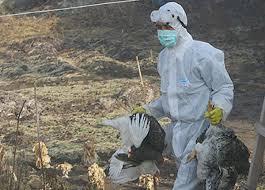 gripa aviara slobozia