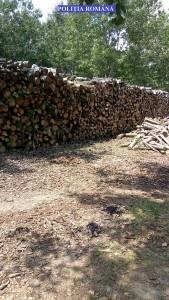 lemne amenda 2