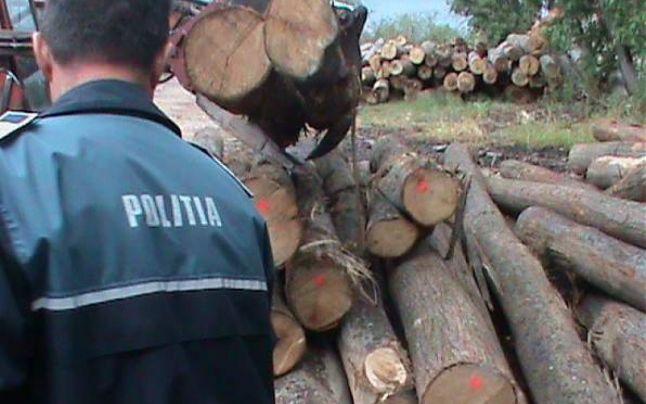 silvicultura POLITIA