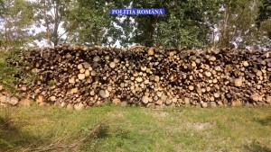 silvicultura pol