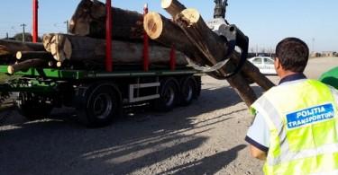 lemne IPJ 1