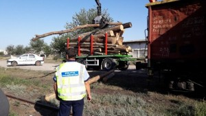 lemne IPJ 2