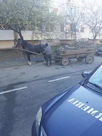 Jandarmerie FURT lemne